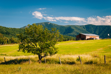 blue ridge: Tree and farm, with view of the Blue Ridge Mountains in the Shenandoah Valley of Virginia.
