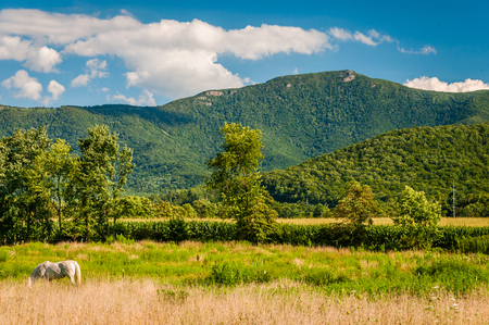 blue ridge: View of the Blue Ridge Mountains in the rural Shenandoah Valley of Virginia. Stock Photo