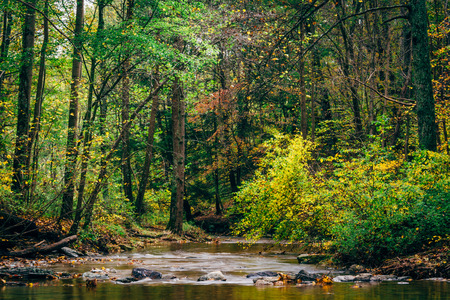 maryland: Creek at Rocks State Park, Maryland.