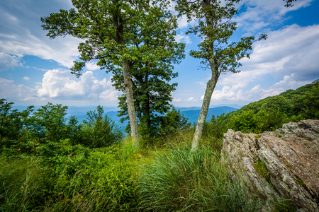 overlook: Rocks and trees at Jewell Hollow Overlook in Shenandoah National Park, Virginia.