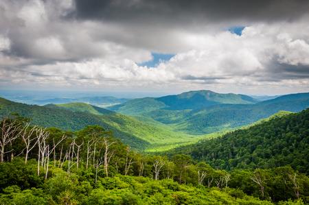blue ridge: View of the Blue Ridge Mountains from Skyline Drive, in Shenandoah National Park, Virginia.