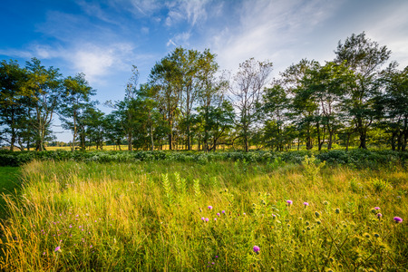 rural skyline: Plants and trees at Big Meadows, in Shenandoah National Park, Virginia.