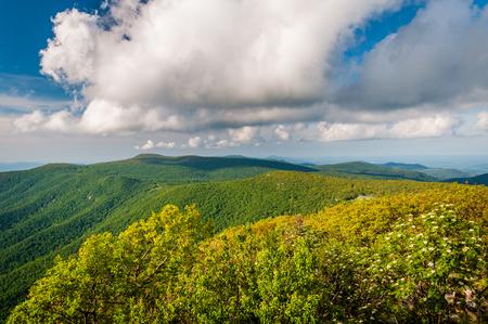 blue ridge: View of the Blue Ridge from Hawksbill Summit, in Shenandoah National Park, Virginia.