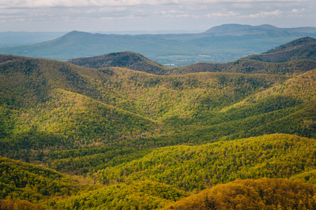 blue ridge: View of spring color in the Blue Ridge Mountains, in Shenandoah National Park, Virginia.