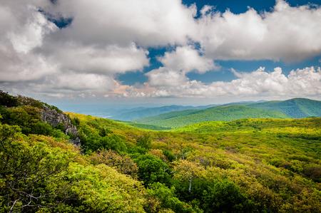 blue ridge: View of the Blue Ridge Mountains from Stony Man Mountain, in Shenandoah National Park, Virginia.