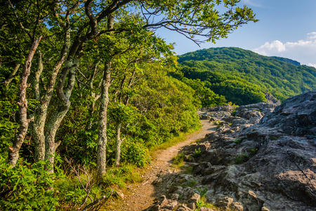 appalachian: The Appalachian Trail on the summit of Little Stony Man Cliffs, in Shenandoah National Park, Virginia.