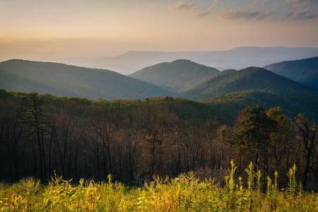 blue ridge: View of the Blue Ridge Mountains at sunset, in Shenandoah National Park, Virginia. Stock Photo