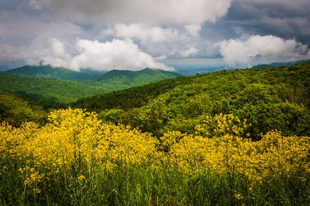 blue ridge: Dramatic sky over the Blue Ridge Mountains in Shenandoah National Park, Virginia. Stock Photo