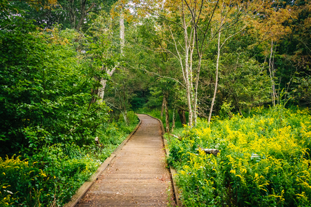 rural skyline: Boardwalk path along the Limberlost Trail in Shenandoah National Park, Virginia. Stock Photo