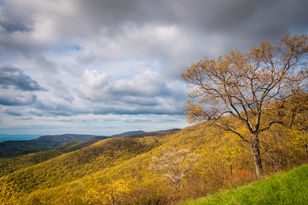 blue ridge: Early spring view of the Blue Ridge Mountains in Shenandoah National Park, Virginia.