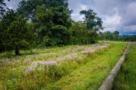 Wildflowers in Shenandoah National Park, Virginia. Stock Photo