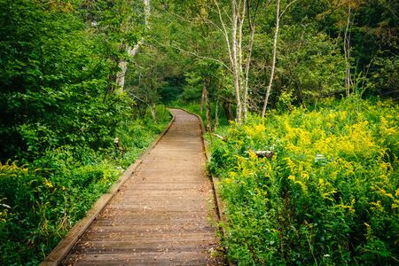 scenic drive: Boardwalk path along the Limberlost Trail in Shenandoah National Park, Virginia. Stock Photo
