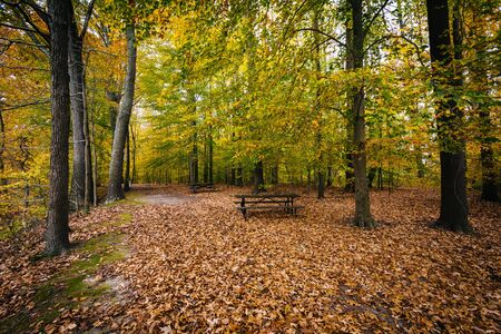 Autumn color at Wye Island, Maryland.