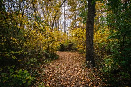 Autumn color along a trail at Wye Island, Maryland.
