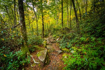 wnc: The Black Rock Nature Trail, at Grandfather Mountain, North Carolina. Stock Photo