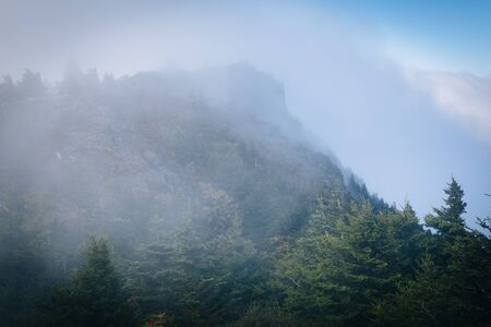 wnc: Pine trees and rocky summit in fog, at Grandfather Mountain, North Carolina.