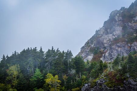 wnc: Trees and rocky slopes in fog, at Grandfather Mountain, North Carolina.