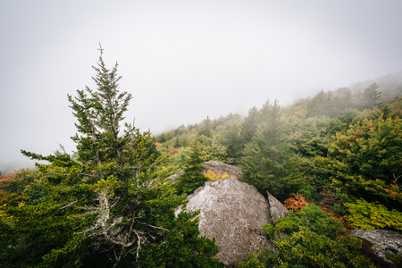 wnc: View of trees in fog from Black Rock, at Grandfather Mountain, in North Carolina.