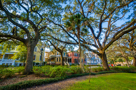 Bomen bij Forsyth-Park, in Savannah, Georgië. Stockfoto