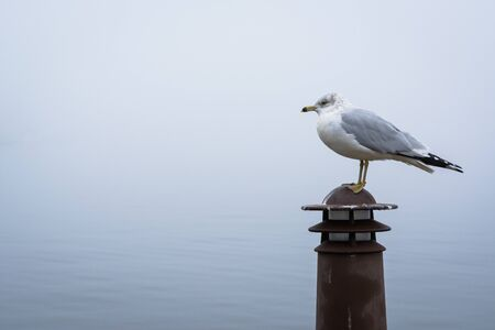 Seagull in Fells Point, Baltimore, Maryland. Stock Photo