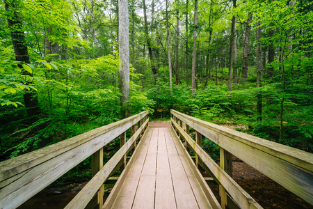 Wooden bridge on a trail in Ricketts Glen State Park, Pennsylvania. Stock Photo
