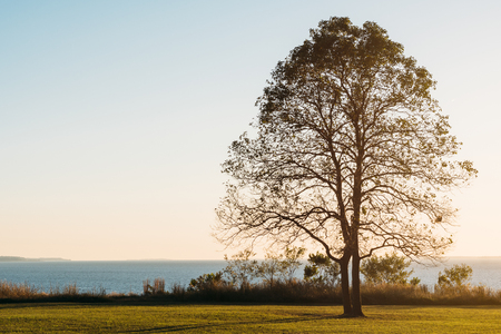 A tree at sunset, at Elk Neck State Park, Maryland Stock Photo
