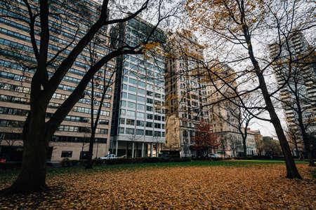 Autumn leaves at Rittenhouse Square Park, in Philadelphia, Pennsylvania. 免版税图像