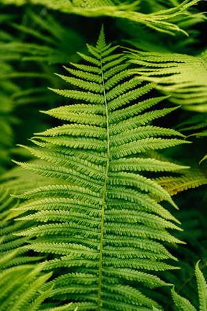 Ferns at 9th Street Community Garden Park, in the East Village, Manhattan, New York City