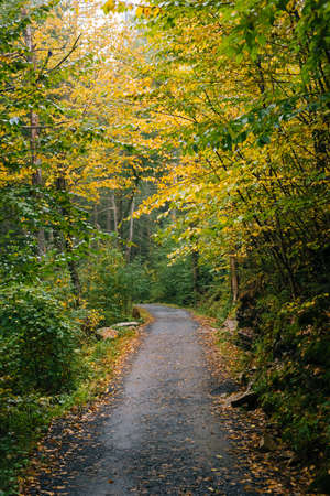 Early fall color along a trail, at Minnewaska State Park, in the Shawangunk Mountains, New York 免版税图像