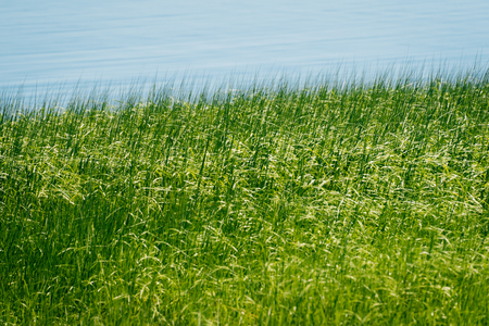 Green grasses along water in Newburyport, Massachusetts