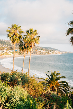 Palm trees and the Pacific Ocean at Heisler Park, in Laguna Beach, Orange County, California