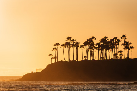 Palm trees at sunset, in Laguna Beach, Orange County, California