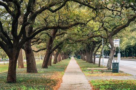 Sidewalk with overhanging trees in Houston, Texas