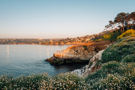 Flowers and rocky coast at sunset, in La Jolla, San Diego, California
