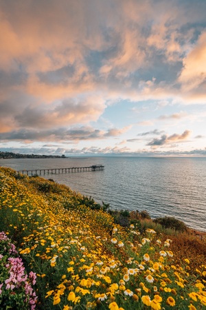 Flowers and view of Scripps Pier at sunset in La Jolla, San Diego, California Stock Photo