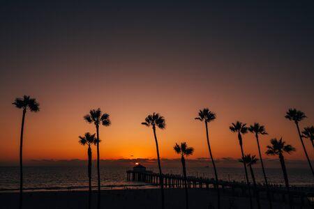 Palmiers et la jetée au coucher du soleil, à Manhattan Beach, Californie