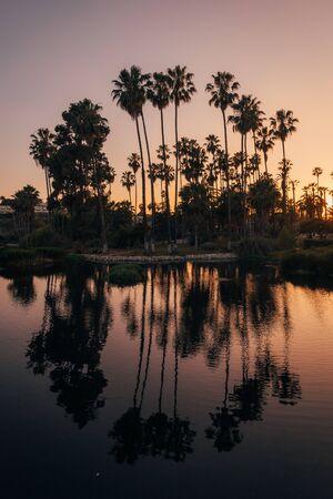Palmen bei Sonnenuntergang im Echo Park, Los Angeles, Kalifornien Standard-Bild