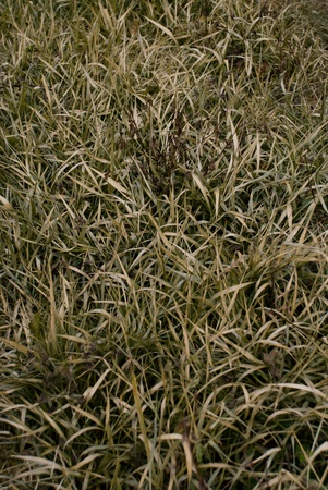 Hay in the background. Stock Photo - 8944127
