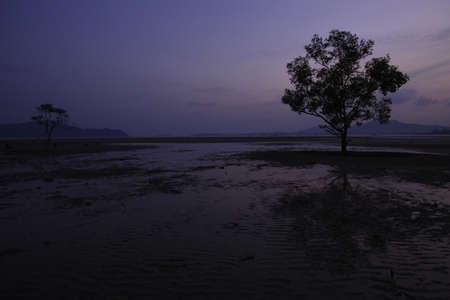 horrizon: sunset at mangrove, phuket south of thailand