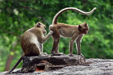 monkeys 免版税图像