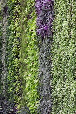 Vertical garden background.