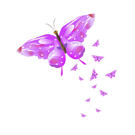 beautiful butterflies isolated on a white