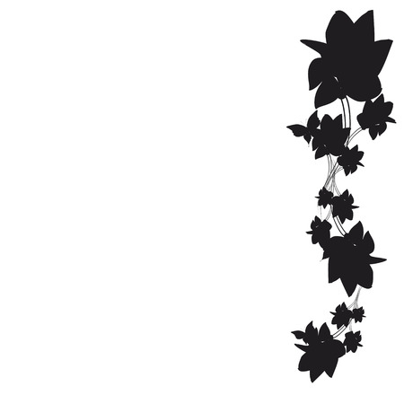beautiful black flowers, isolated on a white Illustration