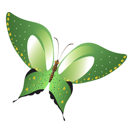 beautiful green butterflies, isolated on a white