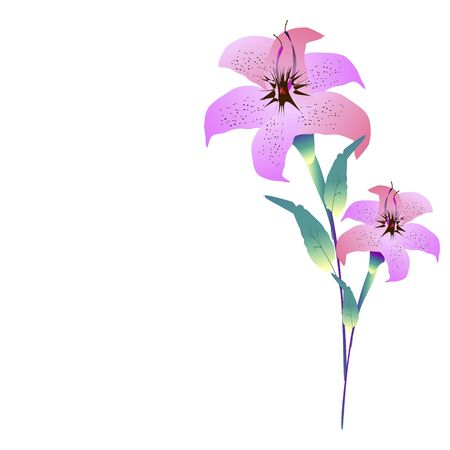 beautiful color flowers, isolated on a white