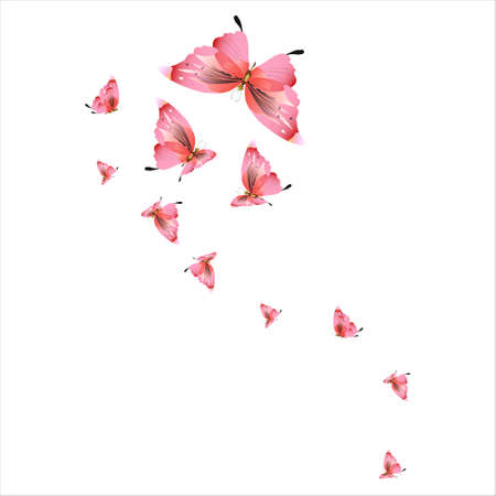 beautiful pink butterflies, isolated on a white Archivio Fotografico