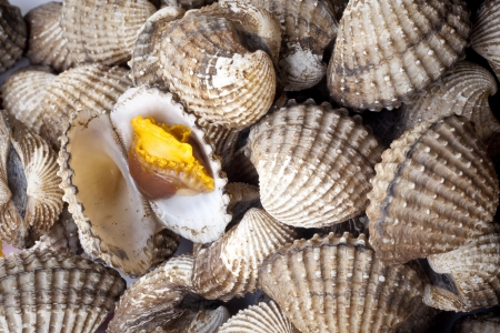 Close up of steamed cockles Stock Photo