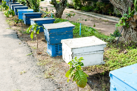 Honey bee hives in wooden boxes
