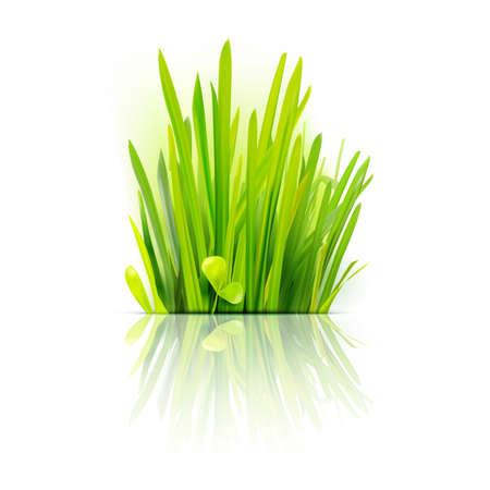 現実的な草デザイン要素。エコ フレンドリーなフィールドの図。夏の緑。成長植物のエンブレム。  イラスト・ベクター素材