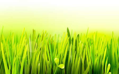 grass field: Realistic grass environmental illustration. Eco friendly field background. Summer green landscape banner. Growth flora. Park field.